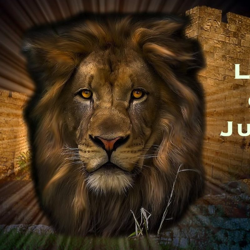 10 Most Popular Lion Of The Tribe Of Judah Pictures FULL HD 1920×1080 For PC Desktop 2021 free download the awakening of the tribe of judah youtube 800x800