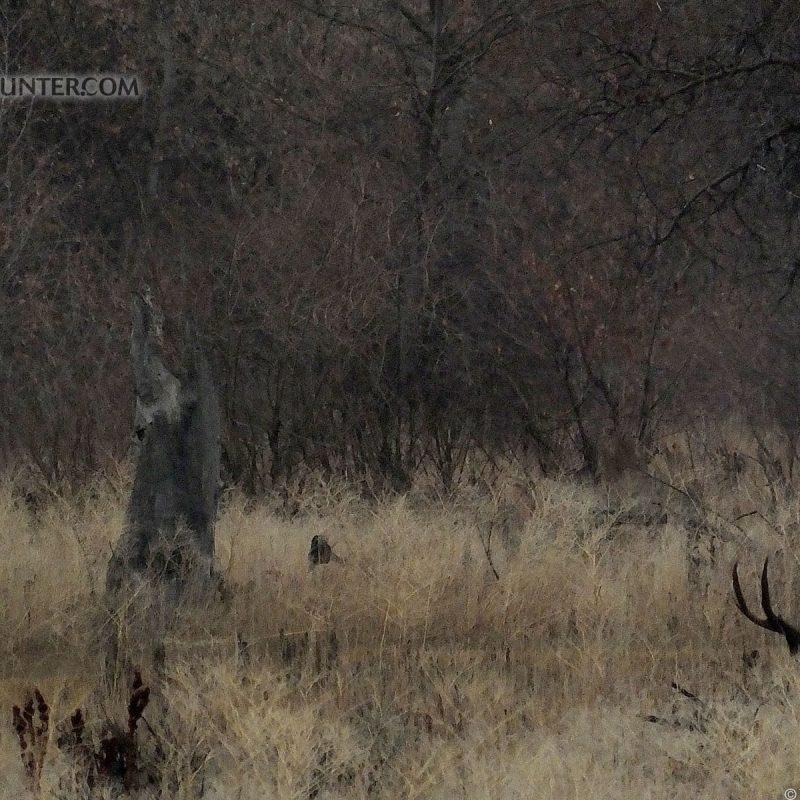 10 Best Deer Hunting Desktop Wallpaper FULL HD 1080p For PC Desktop 2021 free download the diy hunter the diy hunters hunting desktop wallpapers 2 800x800