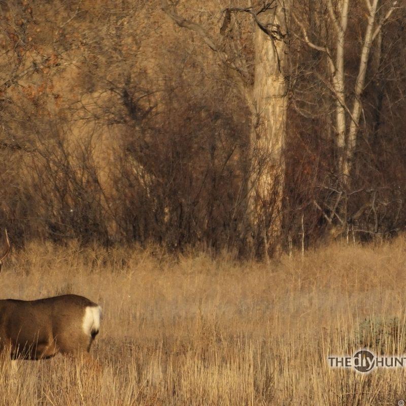 10 Best Deer Hunting Desktop Wallpaper FULL HD 1080p For PC Desktop 2021 free download the diy hunter the diy hunters hunting desktop wallpapers 800x800