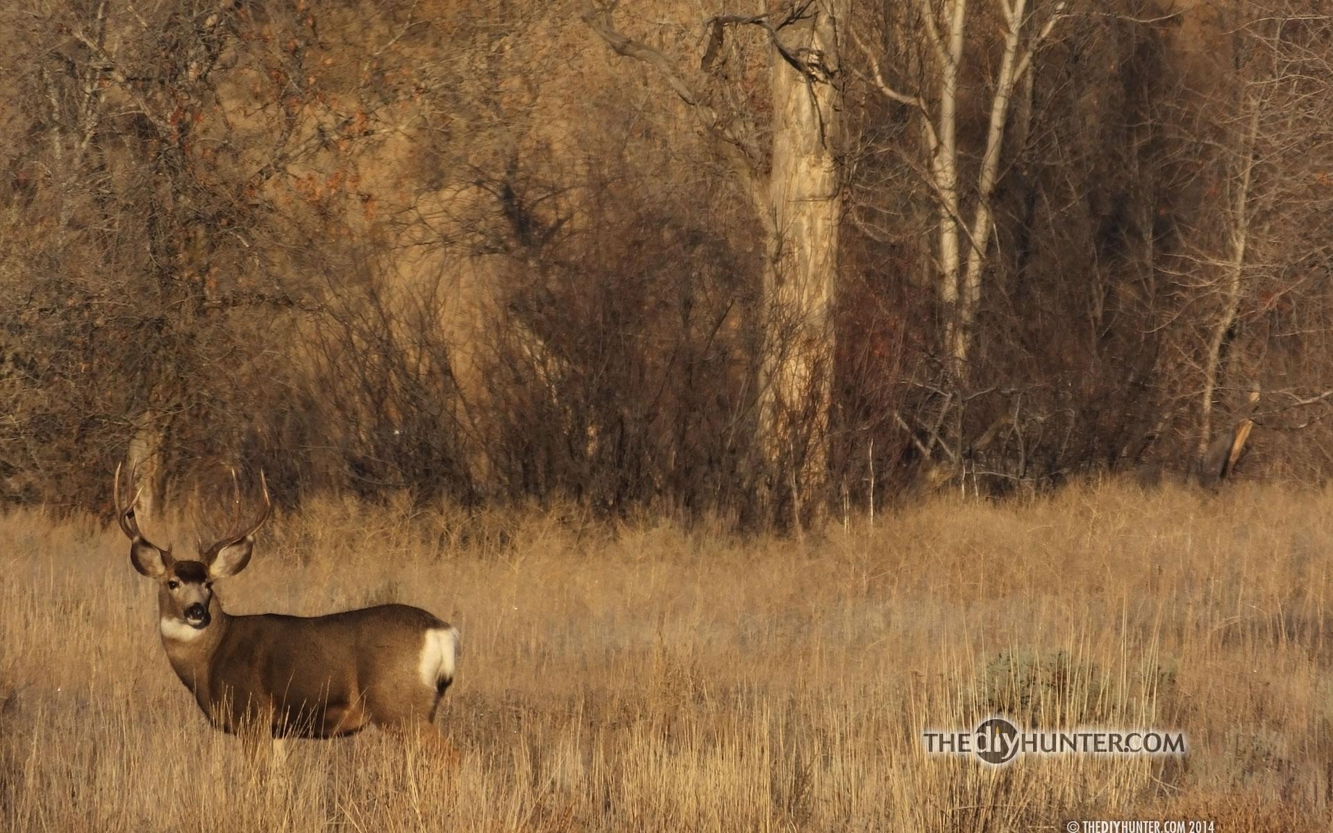 the diy hunter - the diy hunter's hunting desktop wallpapers