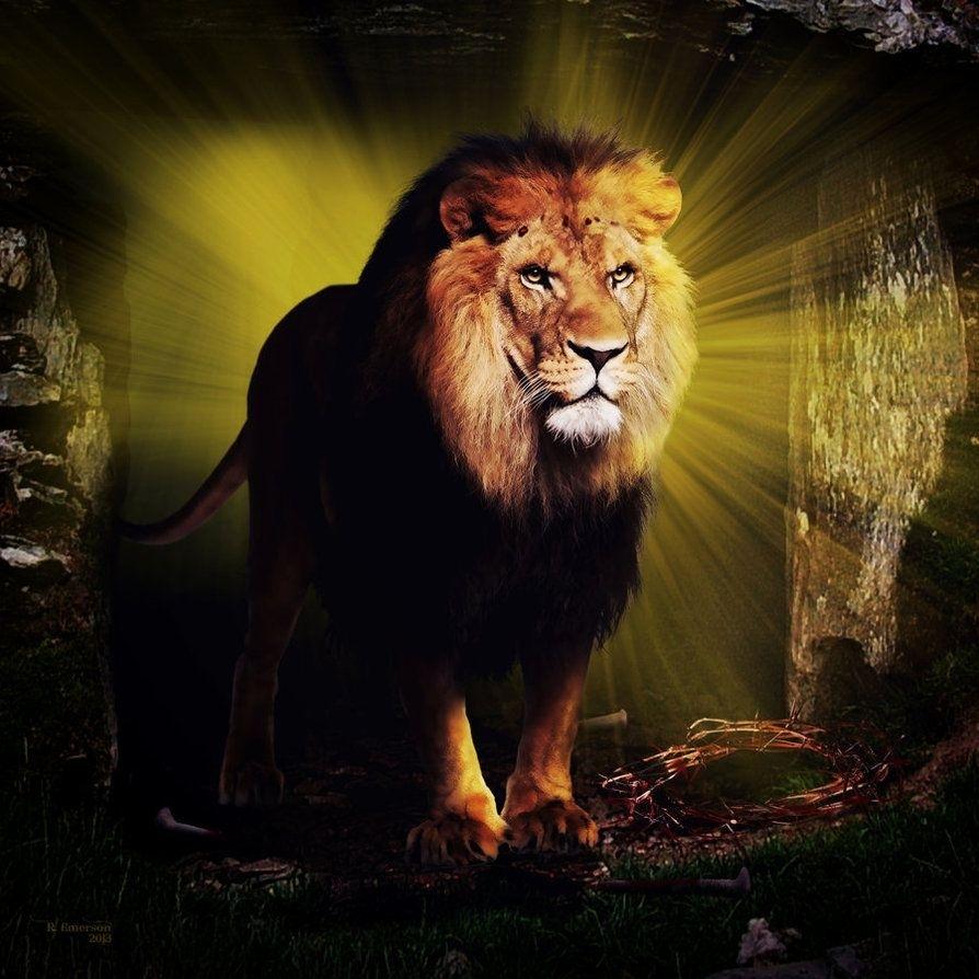 the lion of judah*robhas1left on deviantart | lion of judah