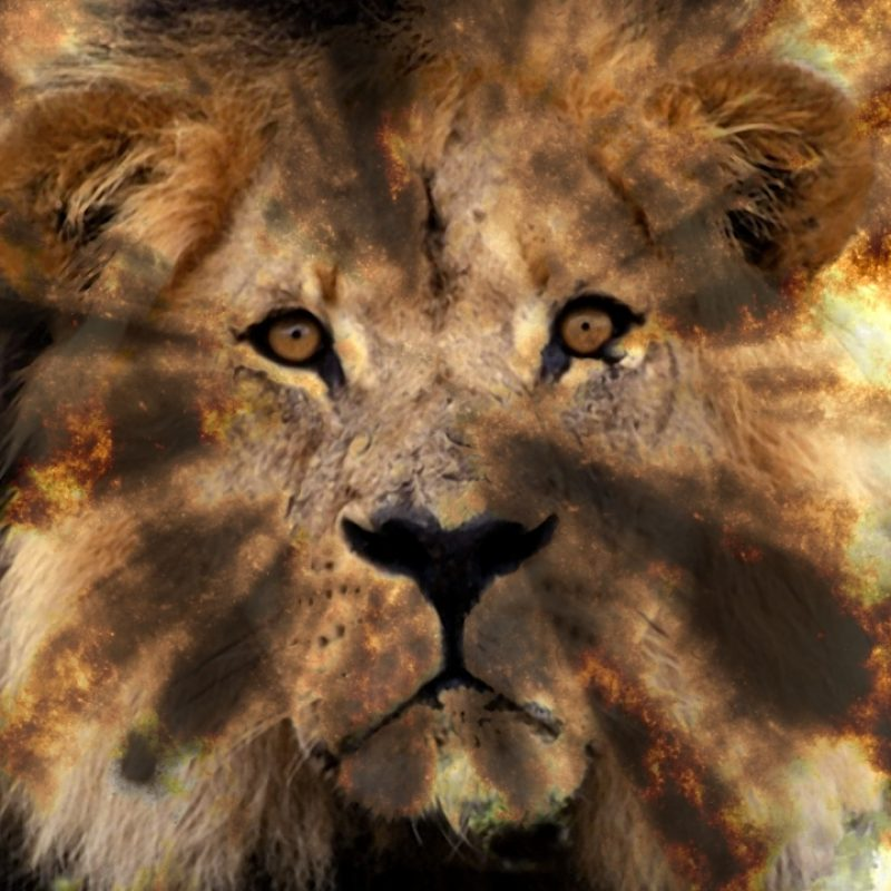 10 Most Popular Lion Of The Tribe Of Judah Pictures FULL HD 1920×1080 For PC Desktop 2021 free download the lion of the tribe of judah loon watchman 800x800