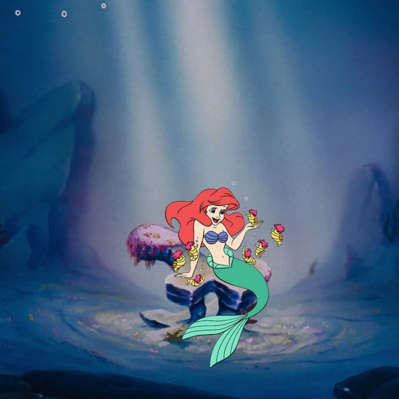 10 Latest The Little Mermaid Wallpapers FULL HD 1080p For PC Desktop 2018 free download the little mermaid wallpaper disneyclips 2 800x800