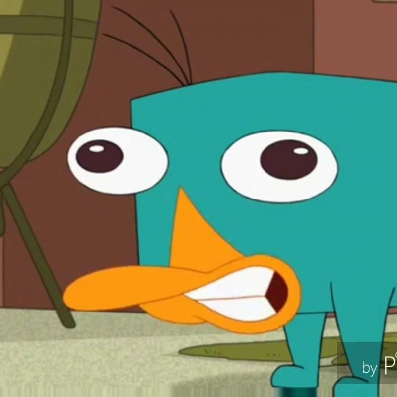 10 Latest Pictures Of Perry The Platypus FULL HD 1080p For PC Background 2018 free download the perry the platypus sound youtube 800x800