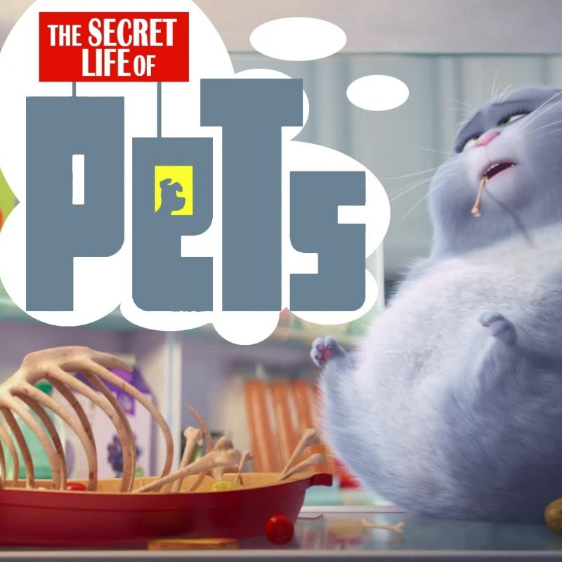 10 Most Popular The Secret Life Of Pets Wallpaper FULL HD 1920×1080 For PC Desktop 2018 free download the secret life of pets images the secret life of pets hd wallpaper 800x800