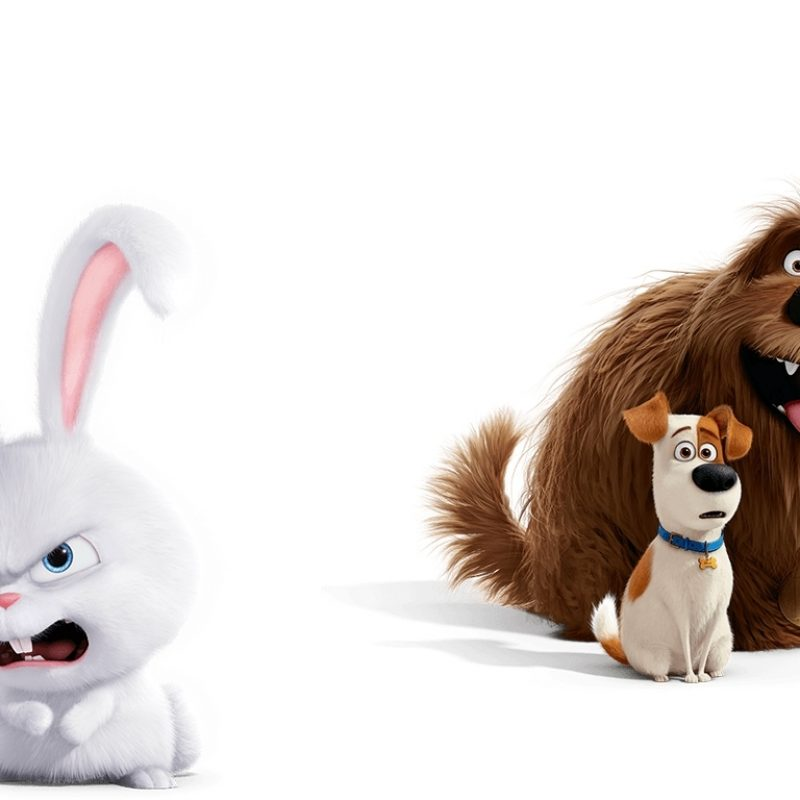 10 Most Popular The Secret Life Of Pets Wallpaper FULL HD 1920×1080 For PC Desktop 2018 free download the secret life of pets rabbit and dogs wallpaper 2018 in the secret 800x800