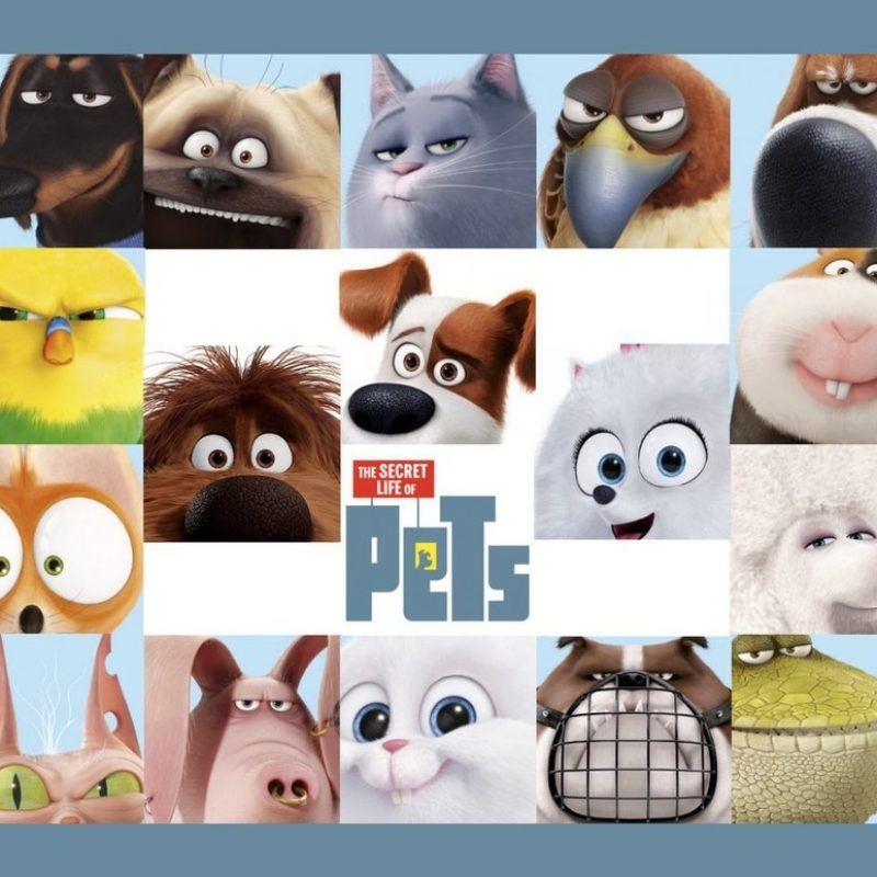10 Most Popular The Secret Life Of Pets Wallpaper FULL HD 1920×1080 For PC Desktop 2018 free download the secret life of pets wallpaperpeachmog on deviantart 800x800