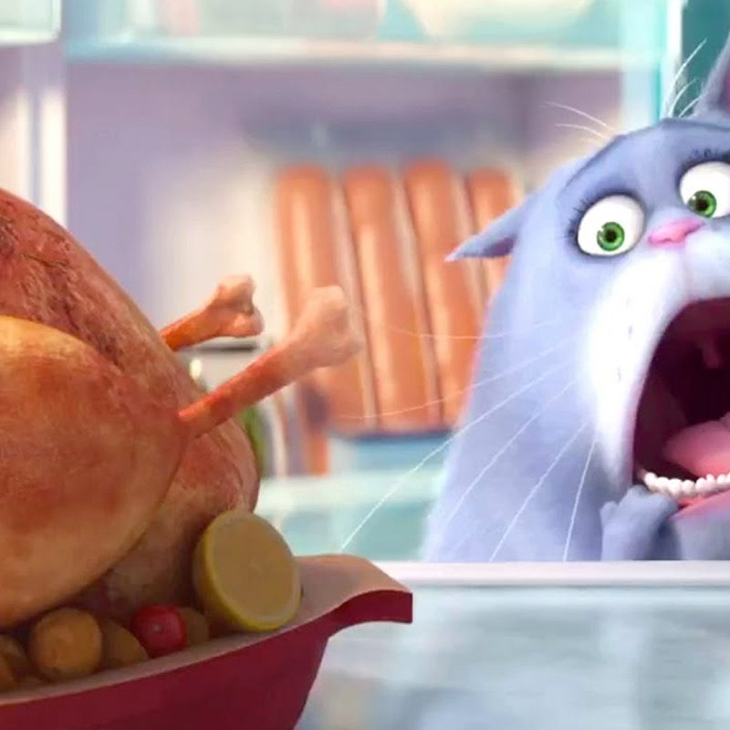 10 Most Popular The Secret Life Of Pets Wallpaper FULL HD 1920×1080 For PC Desktop 2021 free download the secret life of pets wallpapers 44 the secret life of pets 800x800