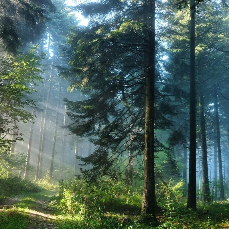 10 Latest Hd Forest Wallpapers 1080P FULL HD 1080p For PC Background 2018 free download the thick forest e29da4 4k hd desktop wallpaper for 4k ultra hd tv 800x800