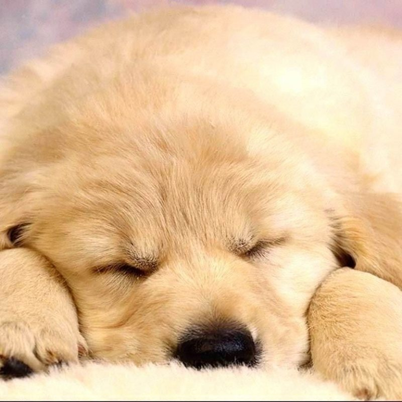 10 Top Puppies Wallpapers Free Download FULL HD 1080p For PC Background 2018 free download tonikum bayer puppies wallpapers free hd wallpapers pinterest 800x800