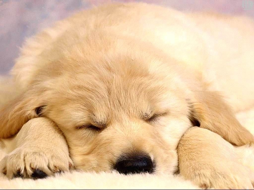 tonikum bayer puppies wallpapers free | hd wallpapers | pinterest