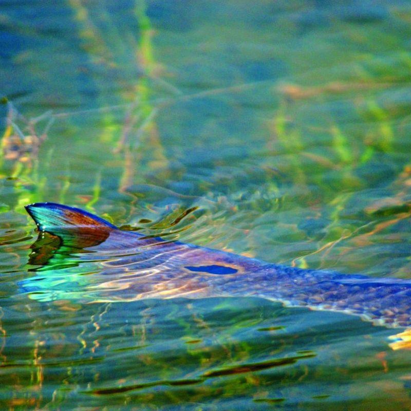 10 New Salt Water Fishing Wallpaper FULL HD 1920×1080 For PC Desktop 2018 free download top 89 redfish wallpaper hd animal spot 800x800