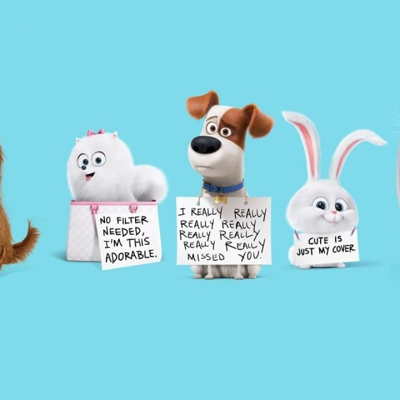 10 Most Popular The Secret Life Of Pets Wallpaper FULL HD 1920×1080 For PC Desktop 2018 free download top the secret life of pets wallpaper free background images 800x800