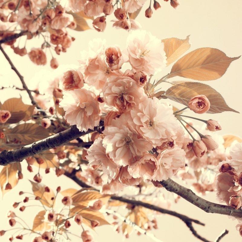 10 Best Desktop Backgrounds Flowers Vintage FULL HD 1080p For PC Desktop 2020 free download tree flowers sepia e29da4 4k hd desktop wallpaper for 4k ultra hd tv 800x800