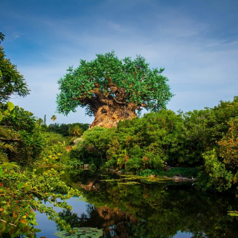 10 Latest Disney Animal Kingdom Wallpaper FULL HD 1920×1080 For PC Background 2020 free download tree of life at disneys animal kingdom full hd wallpaper and 800x800