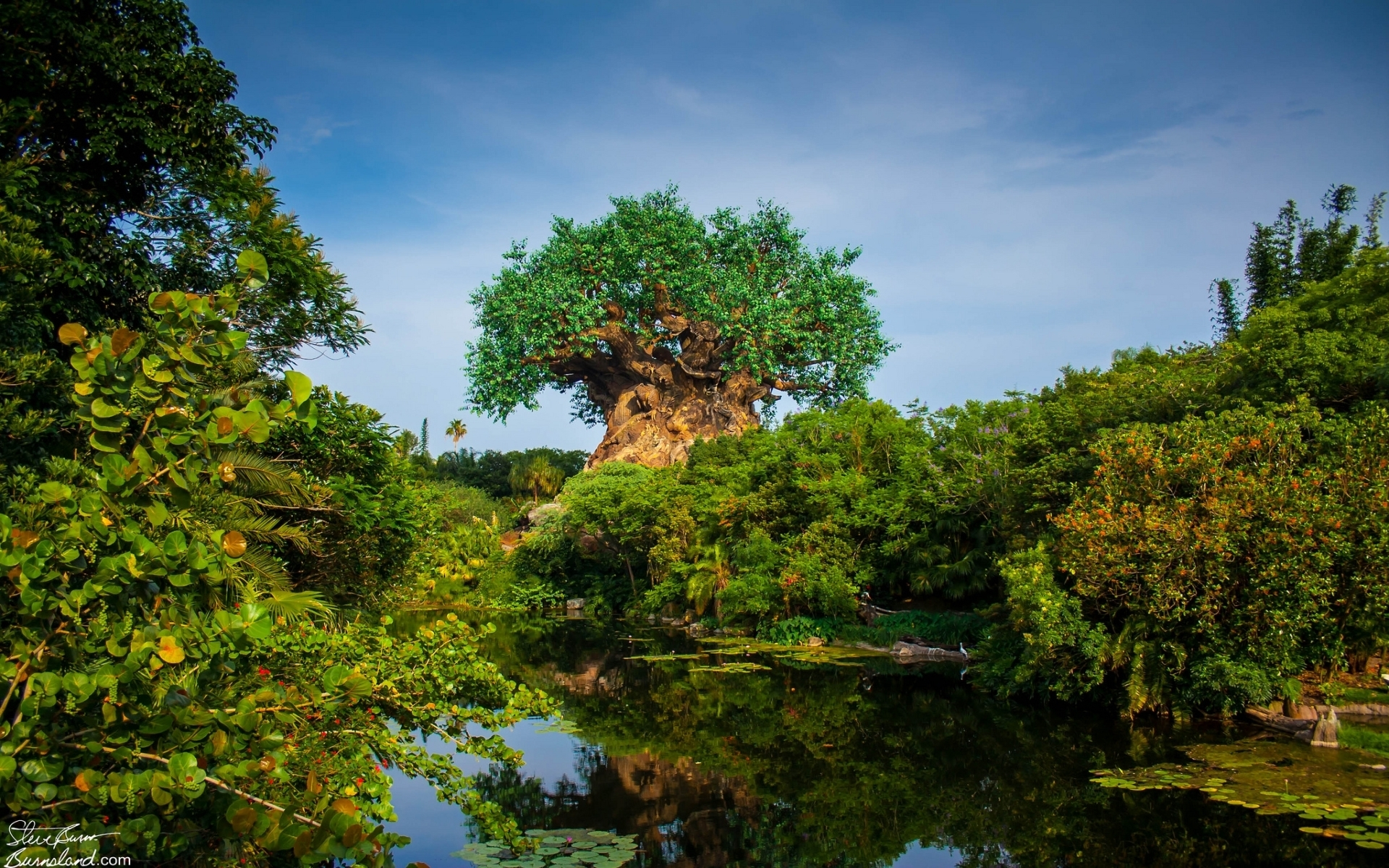 tree of life at disney's animal kingdom full hd wallpaper and