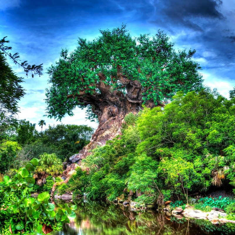 10 Latest Disney Animal Kingdom Wallpaper FULL HD 1920×1080 For PC Background 2020 free download tree of life wallpapers atdisneyagain 1 800x800