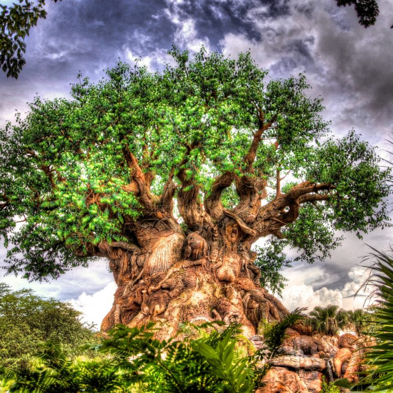 10 Latest Disney Animal Kingdom Wallpaper FULL HD 1920×1080 For PC Background 2020 free download tree of life wallpapers atdisneyagain 2 800x800