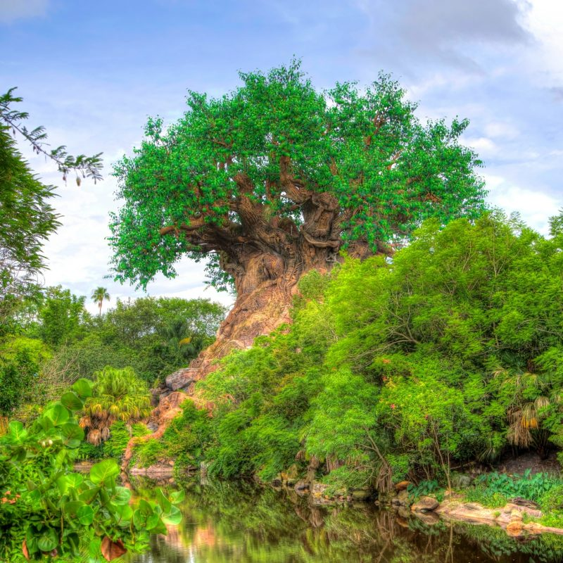 10 Latest Disney Animal Kingdom Wallpaper FULL HD 1920×1080 For PC Background 2020 free download tree of life wallpapers atdisneyagain 800x800