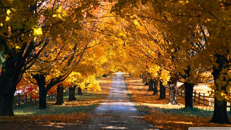 10 Top Autumn Hd Wallpaper 1080P FULL HD 1080p For PC Desktop 2020 free download tree tunnel road autumn e29da4 4k hd desktop wallpaper for 4k ultra hd 800x450