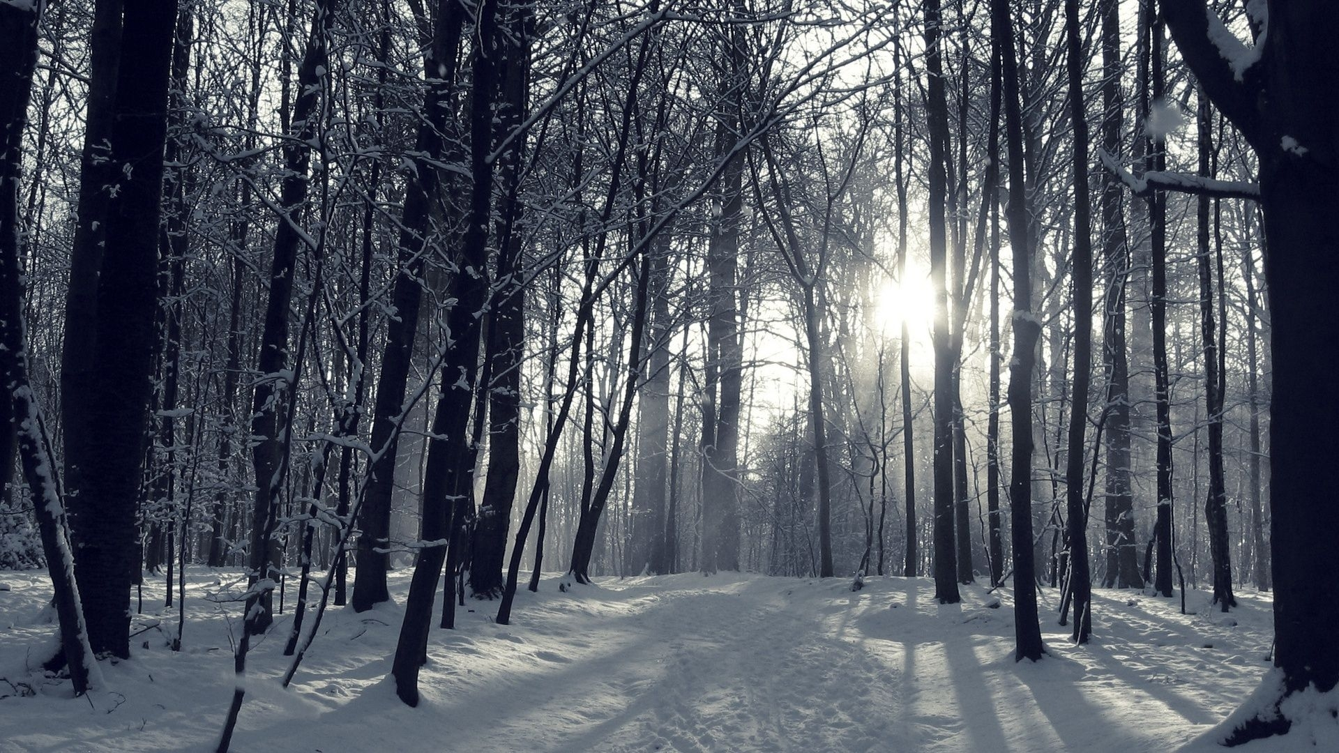 trees snow trail trees path winter forest nature desktop