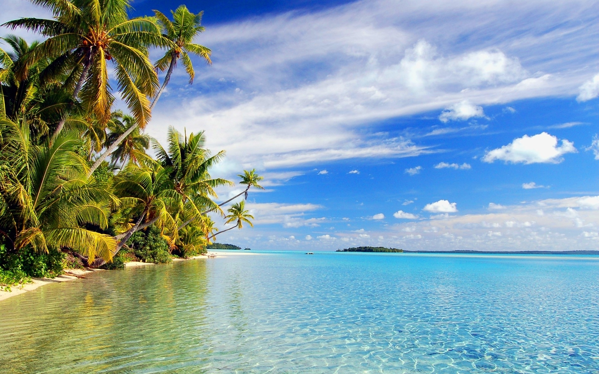 Tropical HD Wallpaper Background Image x ID