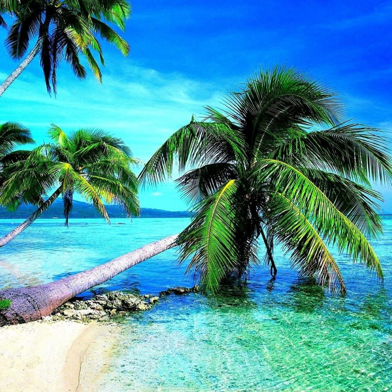 10 Best Tropical Beach Hd Wallpaper FULL HD 1920×1080 For PC Background 2018 free download tropical beach hd wallpaper 68 images 800x800