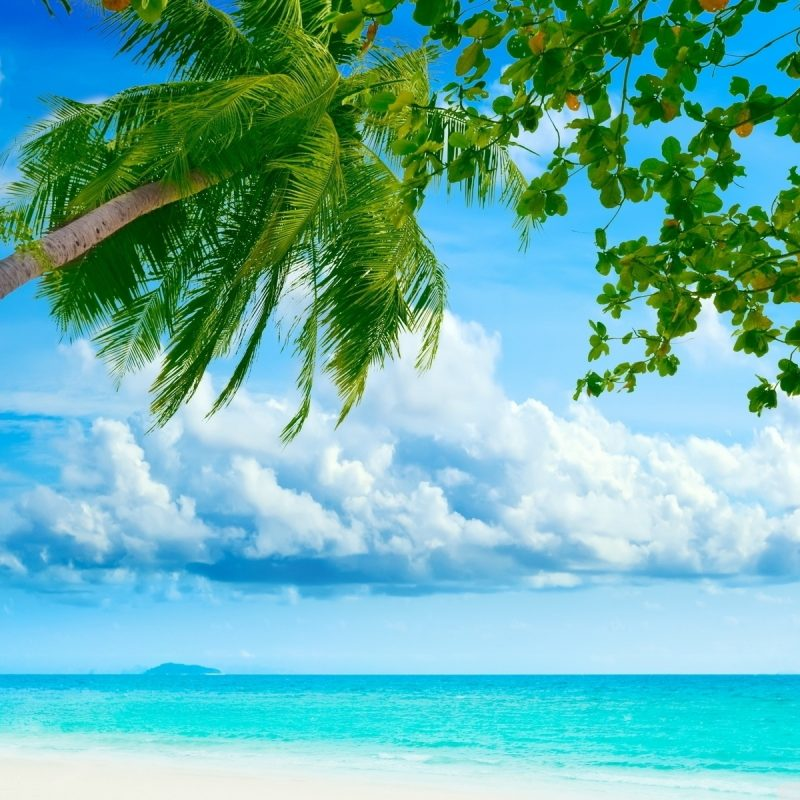 10 Best Tropical Beach Hd Wallpaper FULL HD 1920×1080 For PC Background 2018 free download tropical beach resorts e29da4 4k hd desktop wallpaper for 4k ultra hd tv 800x800