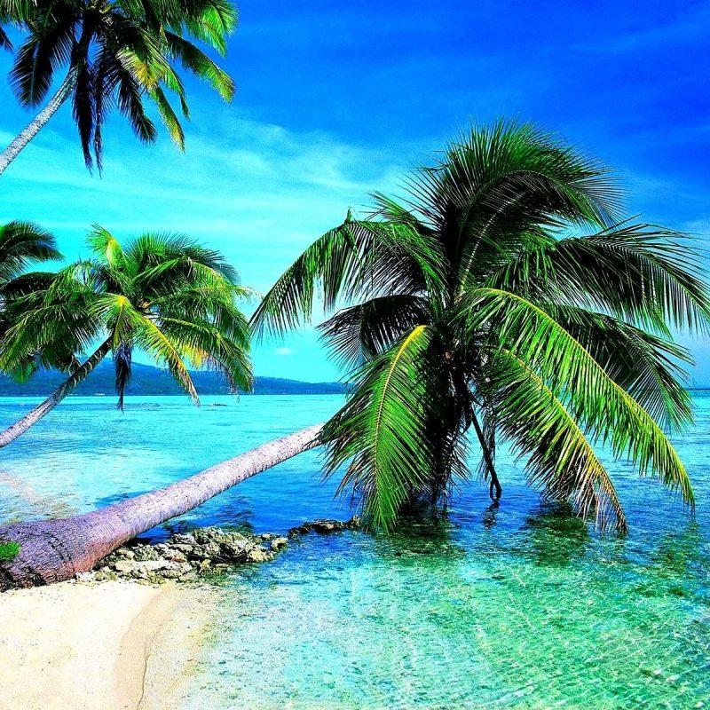 10 Latest Tropical Beach Wallpaper Hd FULL HD 1920×1080 For PC Desktop 2020 free download tropical beach wallpaper desktop c2b7e291a0 1 800x800
