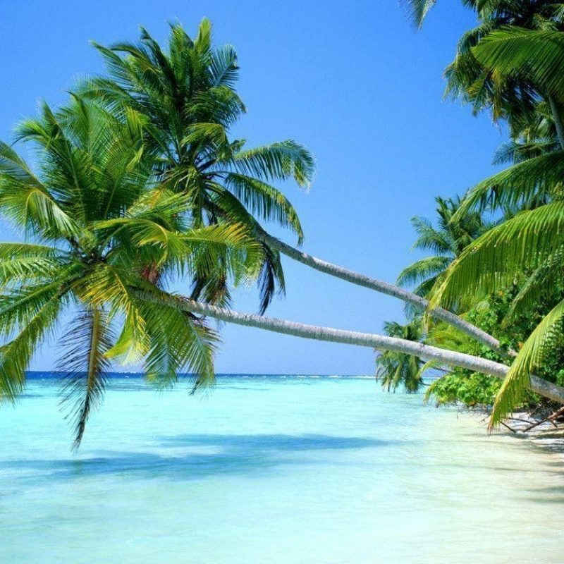 10 Latest Tropical Beach Wallpaper Desktop FULL HD 1920×1080 For PC Background 2020 free download tropical beach wallpapers desktop wallpaper cave 1 800x800