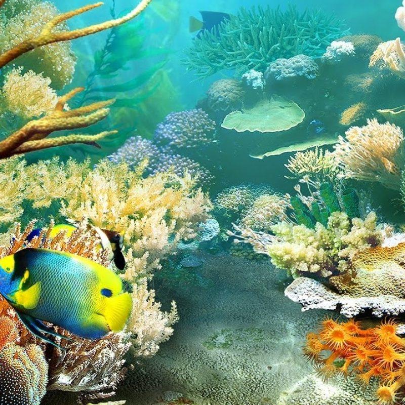 10 Best Tropical Fish Wallpaper Hd FULL HD 1080p For PC Desktop 2021 free download tropical fish 3d screensaver live wallpaper hd youtube 800x800
