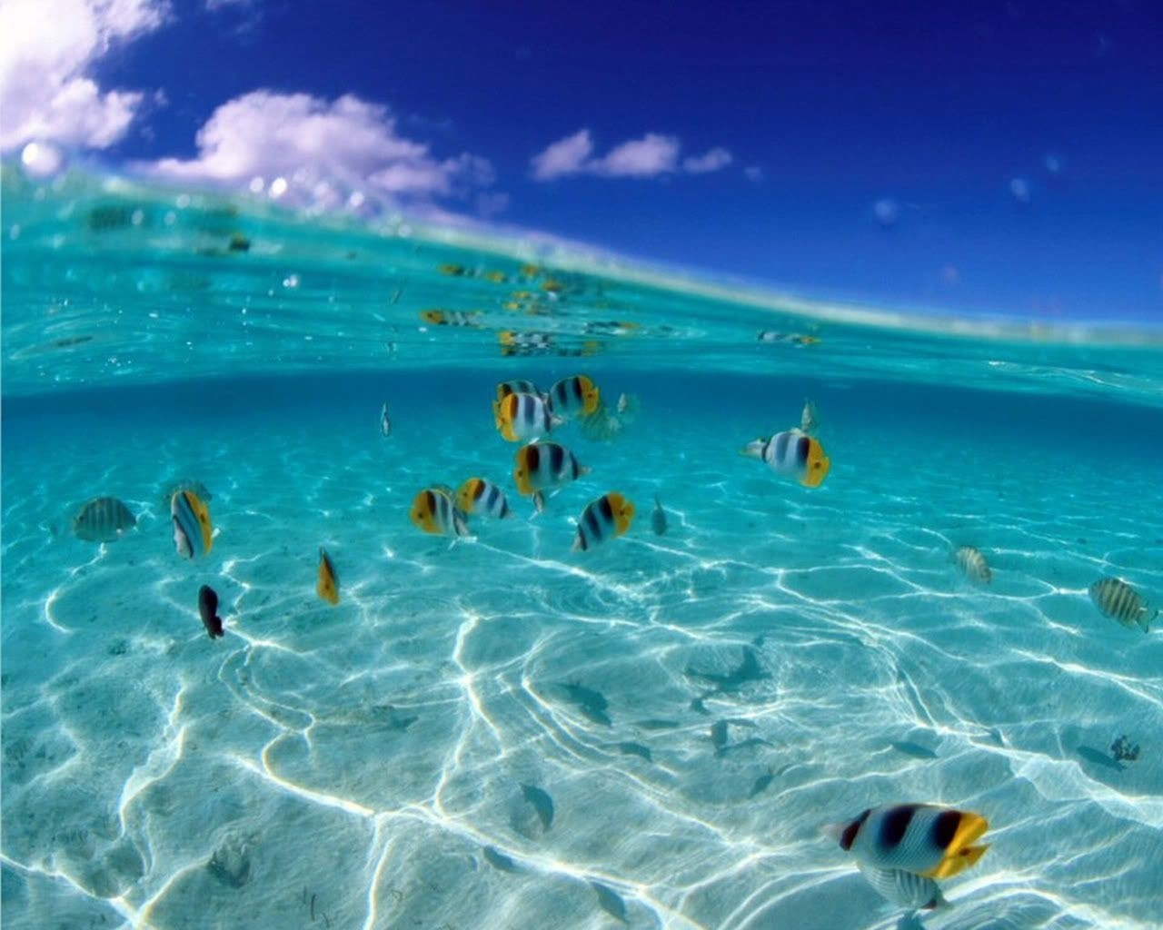 tropical fish background tropical fish wallpaper for desktop   just