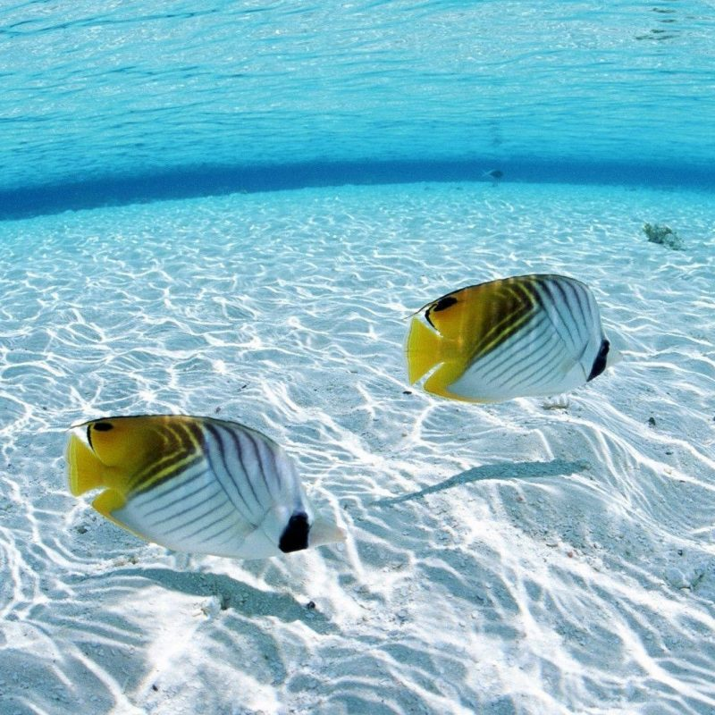 10 Top Tropical Fish Desktop Wallpaper FULL HD 1080p For PC Background 2020 free download tropical fish backgrounds wallpaper cave 3 800x800