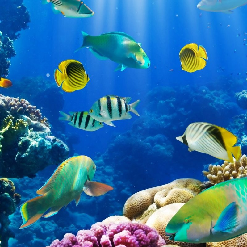 10 Latest Tropical Fishes Wallpapers Hd FULL HD 1080p For PC Desktop 2018 free download tropical fish full hd wallpaper and background image 2000x1100 800x800