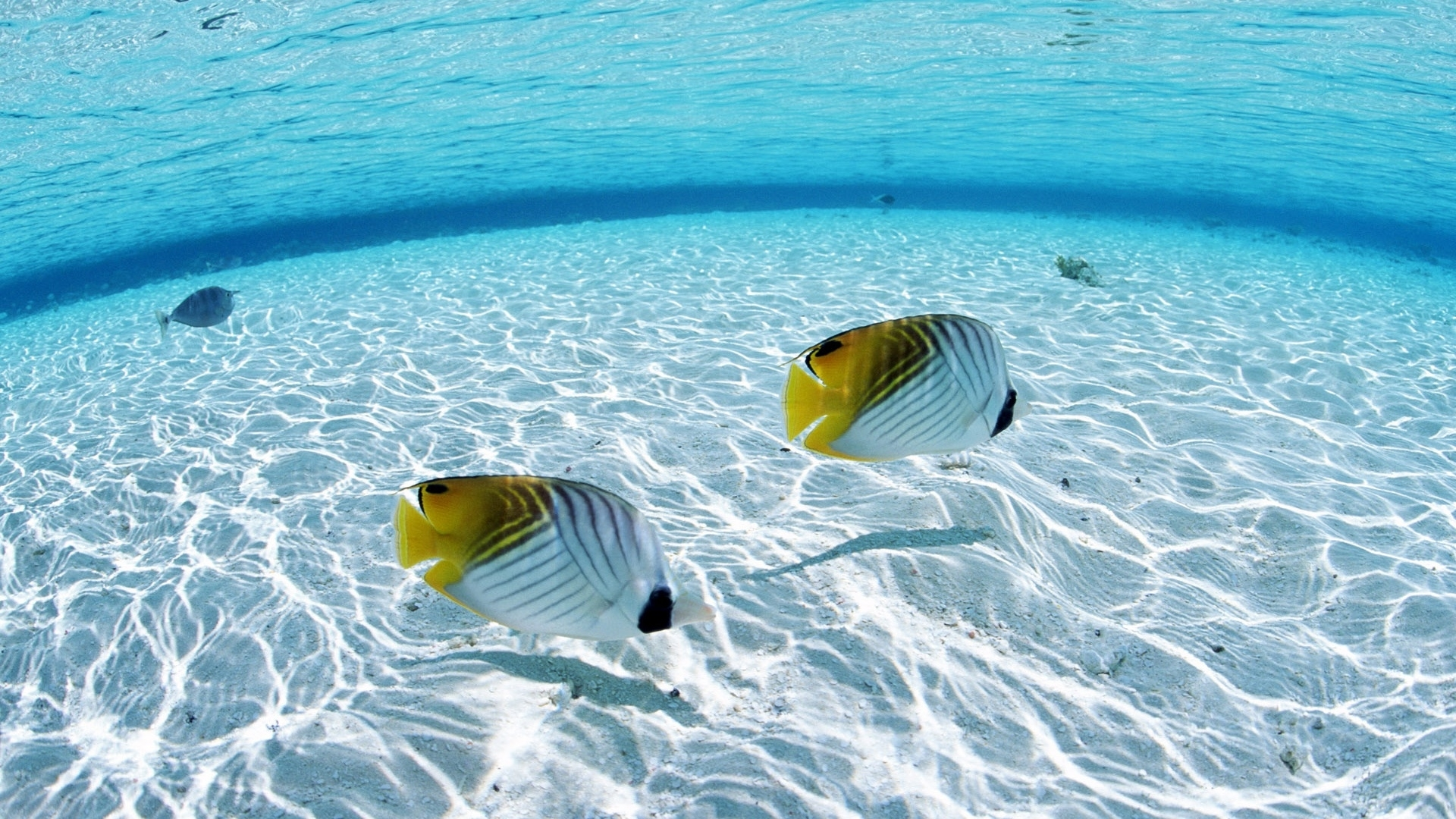 tropical fish wallpaper hd download best tropical fish wallpaper