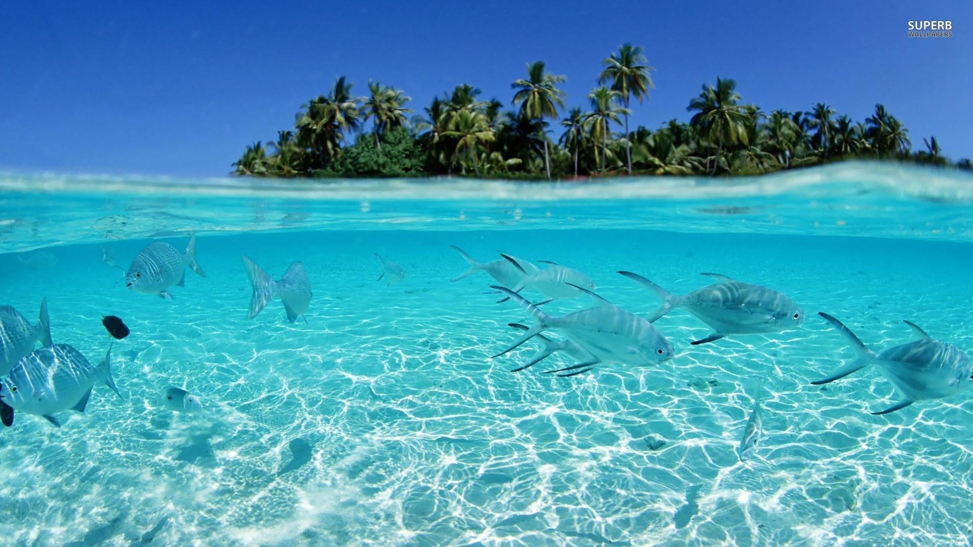 tropical fish wallpaper hd download tropical fish wallpaper - top