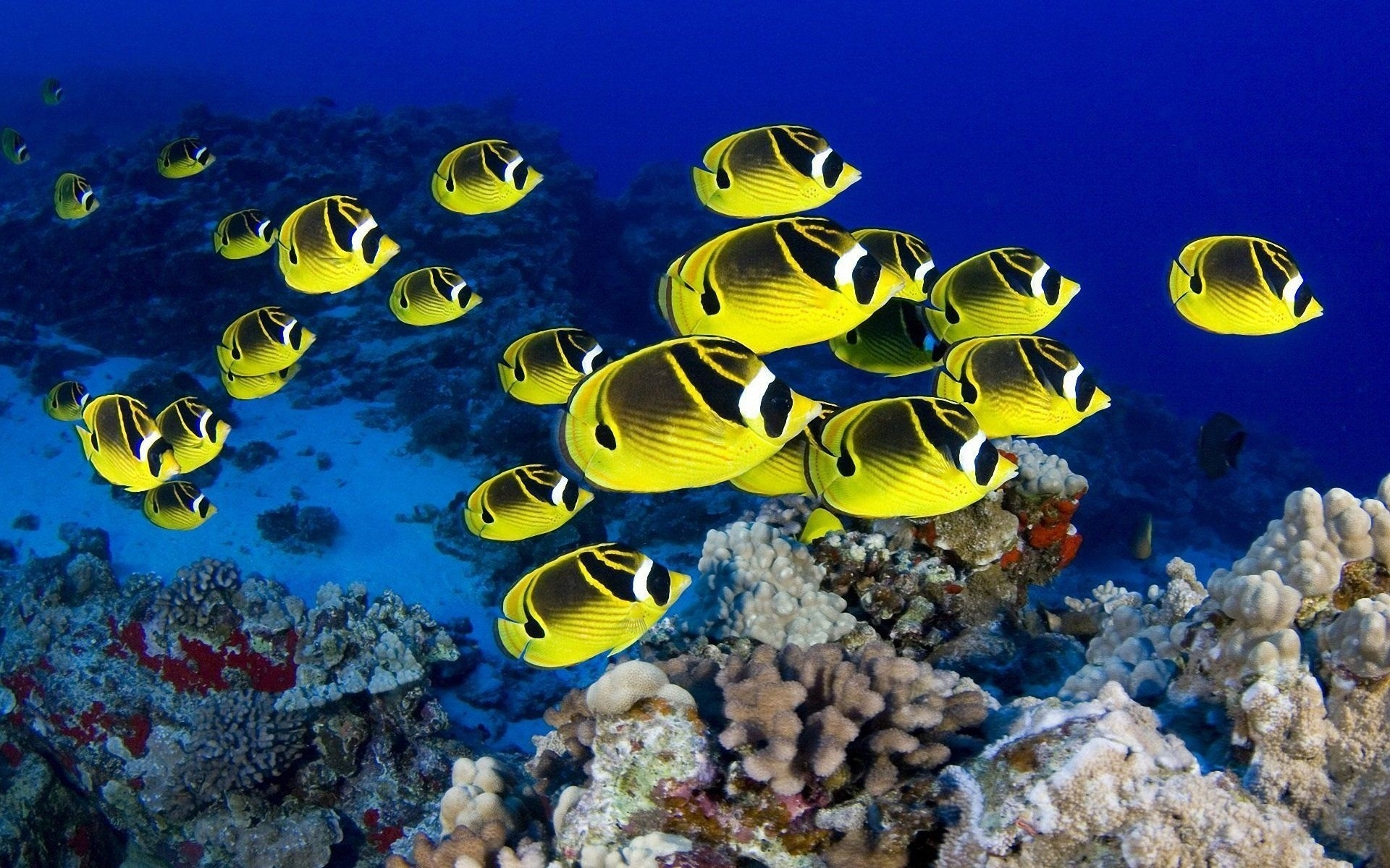 tropical fish wallpapers group (75+)