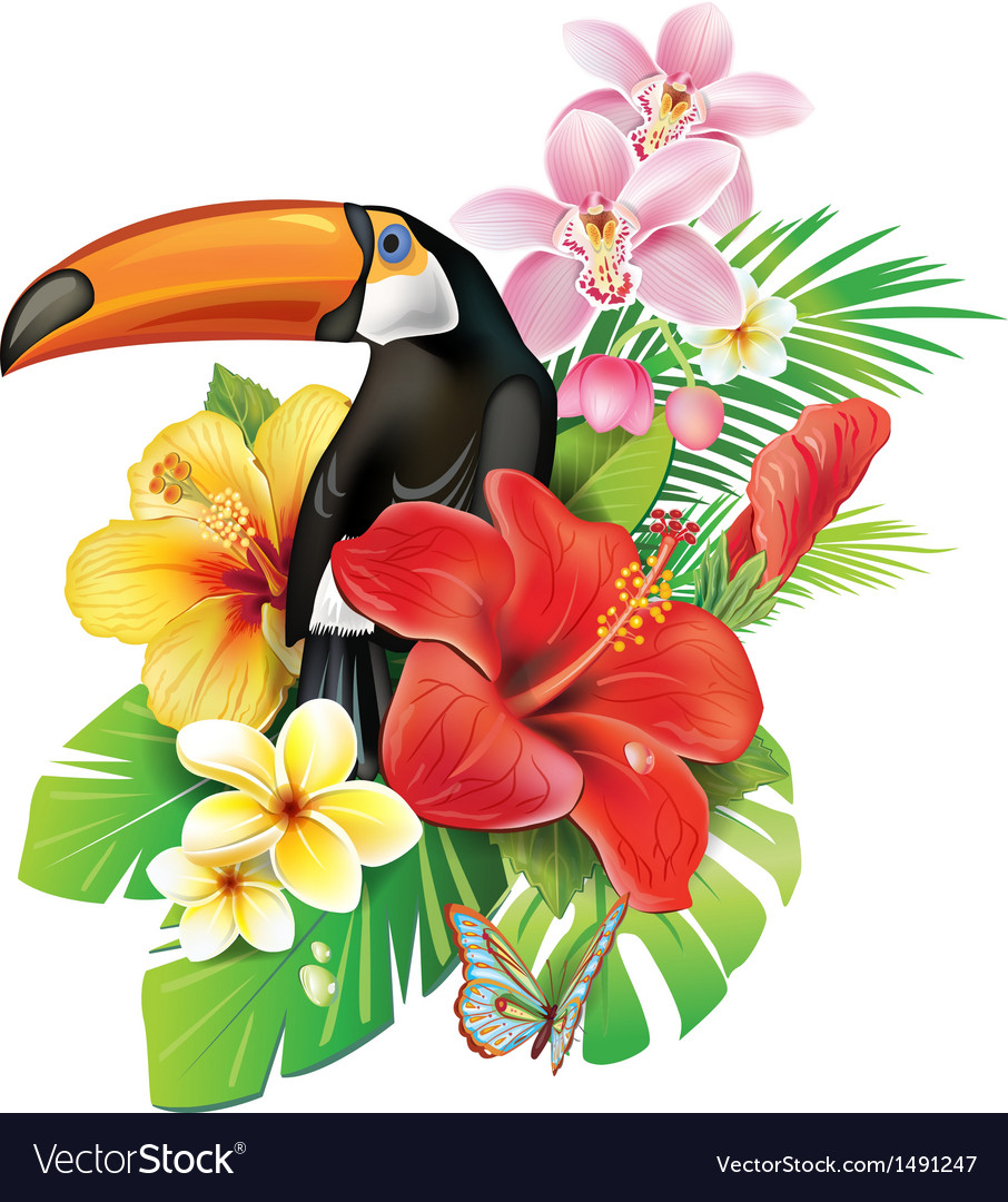 tropical flowers and toucan royalty free vector image