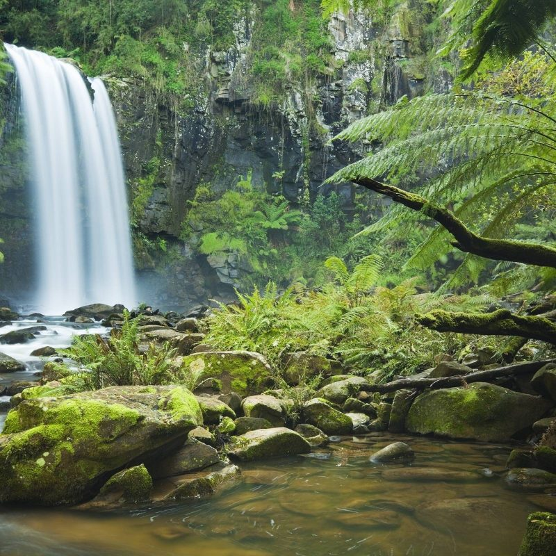 10 Top Hd Rain Forest Wallpaper FULL HD 1080p For PC Desktop 2018 free download tropical rainforest wallpapers wallpaper cave 800x800
