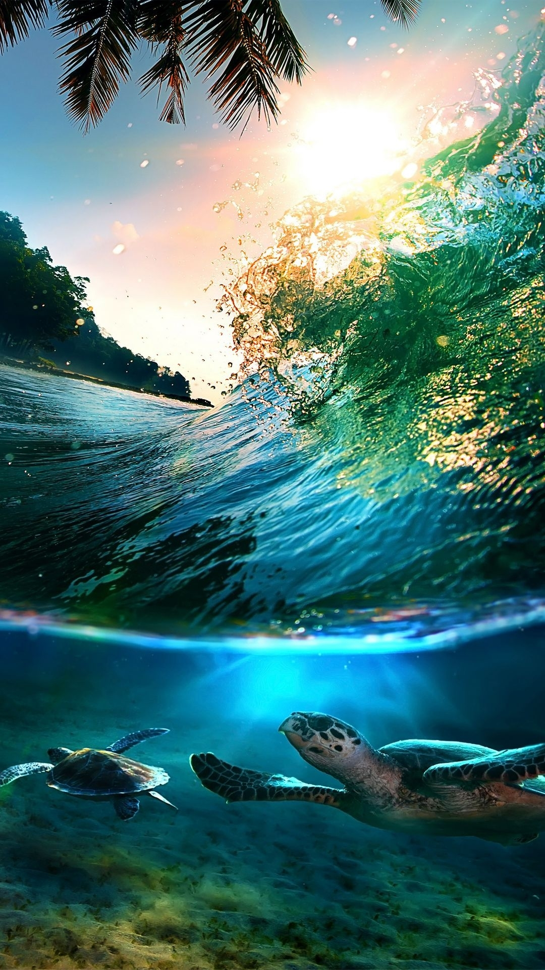 tropical sea island turtles | htc one wallpaper | pinterest | turtle