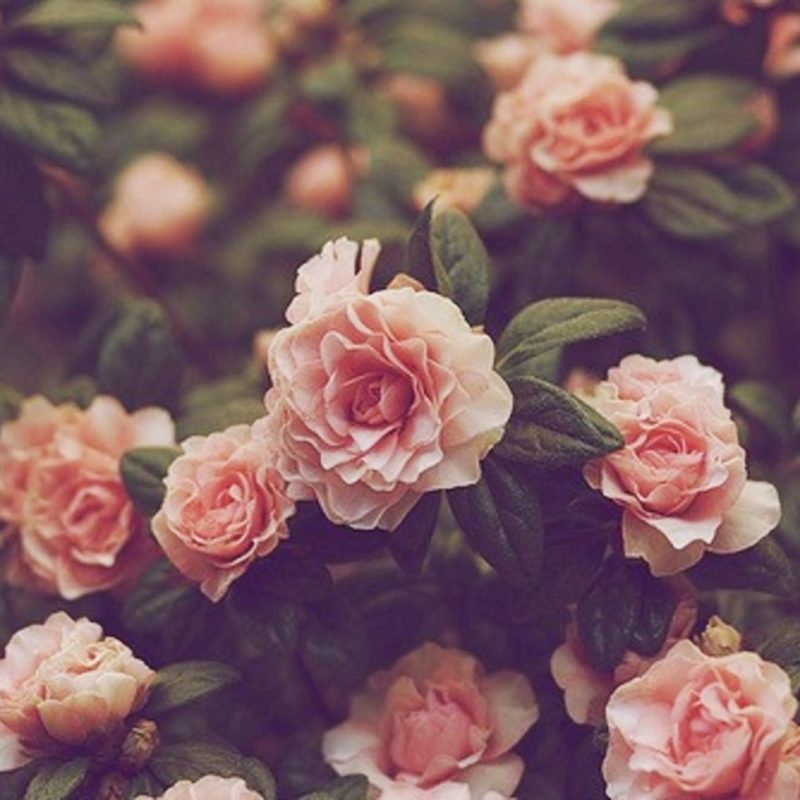 10 New Background Tumblr Flower Vintage FULL HD 1080p For PC Background 2018 free download tumblr backgrounds vintage flowers peaceful pinterest 800x800