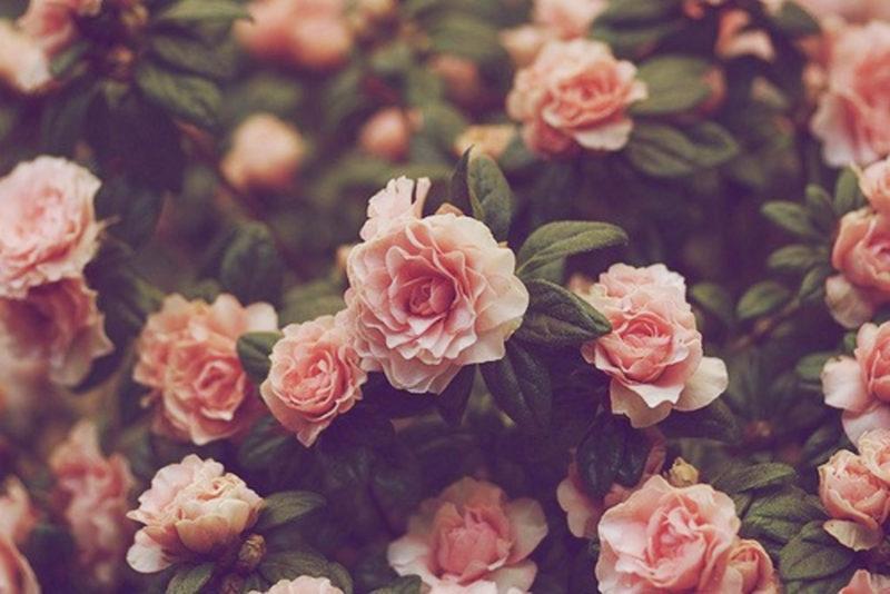 10 Latest Flowers Tumblr Wallpaper FULL HD 1080p For PC Desktop 2021 free download tumblr floral wallpaper sf wallpaper 800x534