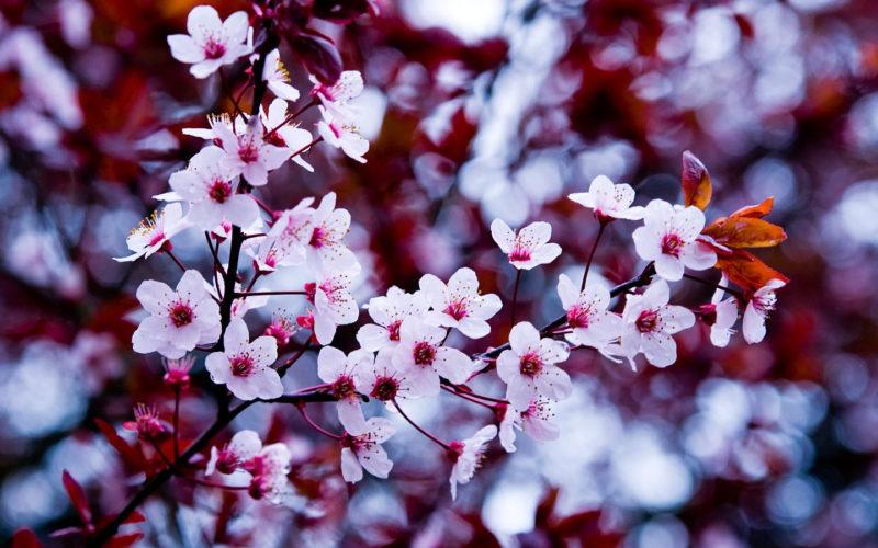 10 Latest Flowers Tumblr Wallpaper FULL HD 1080p For PC Desktop 2021 free download tumblr flower backgrounds wallpaper cave 800x500