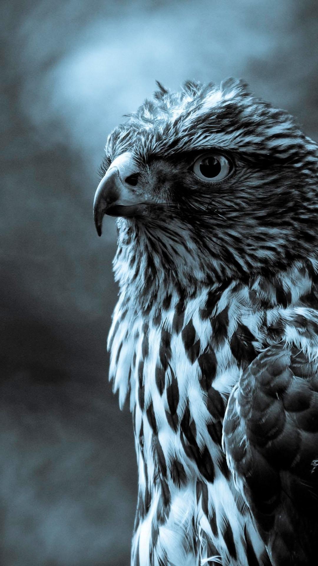 twilight eagle profile dark android wallpaper free download