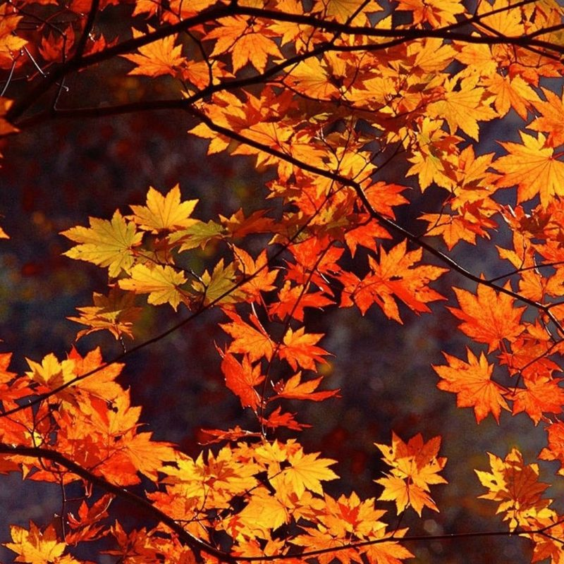 10 Latest Autumn Wallpaper For Pc FULL HD 1080p For PC Background 2021 free download undefined japanese desktop wallpaper 57 wallpapers adorable 800x800