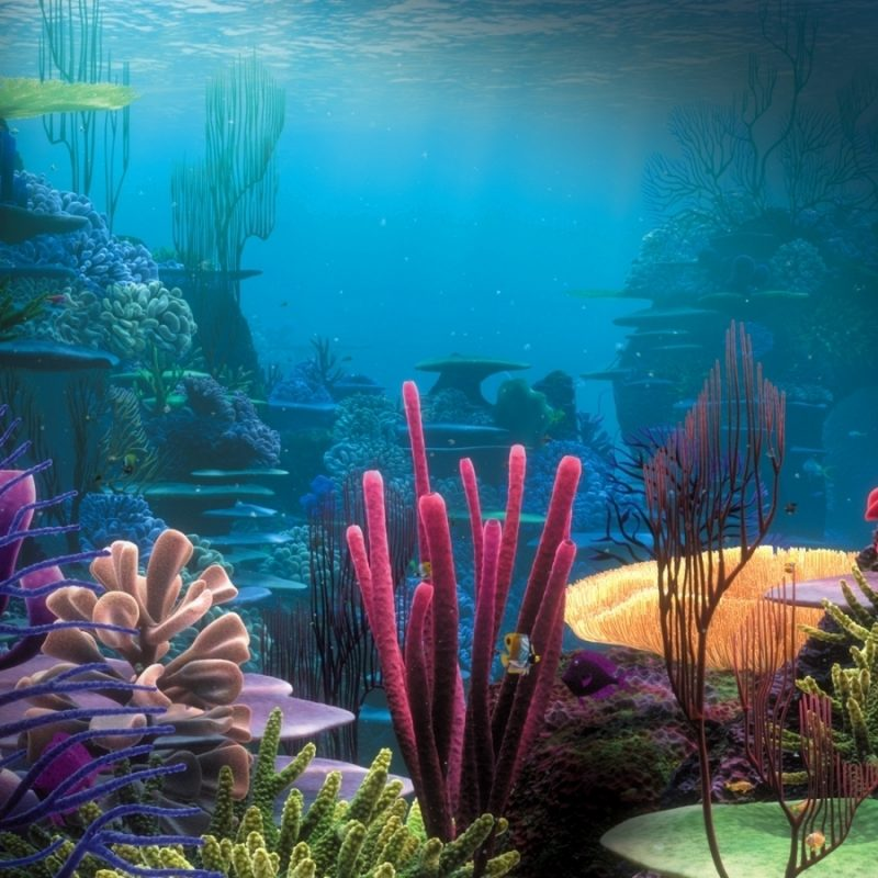 10 Best Under The Sea Wallpaper FULL HD 1920×1080 For PC Desktop 2018 free download under the sea party wallpaper coral reefs and animal 800x800