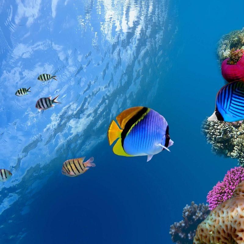 10 Latest Underwater Wallpaper Desktop Hd FULL HD 1920×1080 For PC Background 2018 free download underwater desktop backgrounds wallpaper cave 800x800
