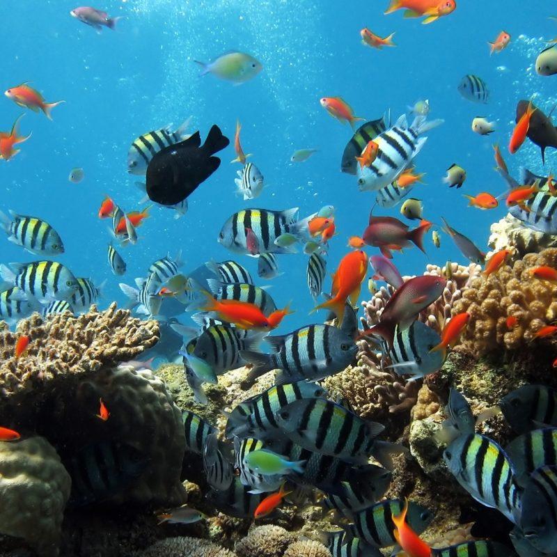 10 Latest Underwater Wallpaper Desktop Hd FULL HD 1920×1080 For PC Background 2018 free download underwater hd photos hd wallpaper 800x800
