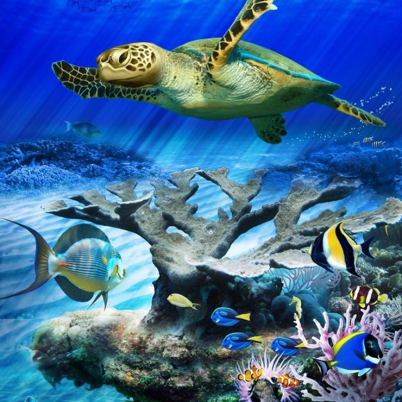 10 New Sea Turtle Iphone Wallpaper FULL HD 1080p For PC Background 2018 free download underwater tortoise hd wallpaper best free wallpaper collection 3d 800x800