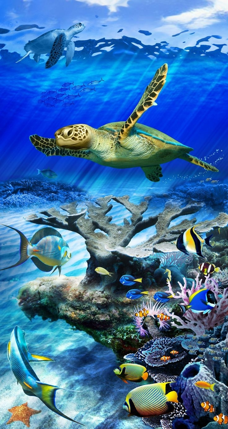 underwater tortoise hd wallpaper best free wallpaper collection | 3d